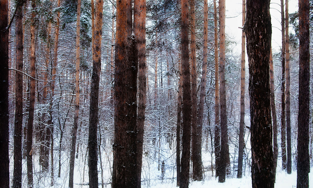 Frozen Forest