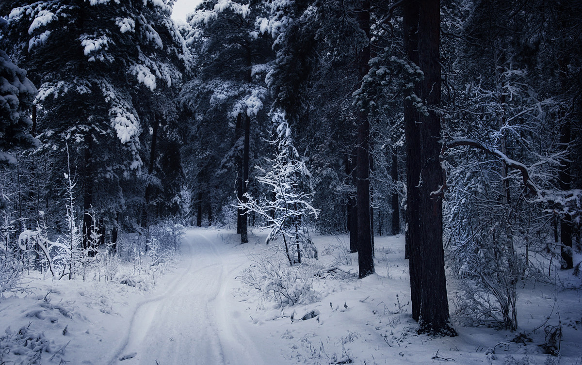 Snowy Winter: Somwhere in forest
